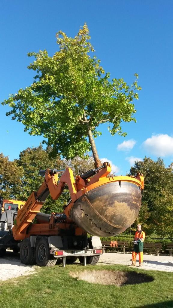 Baumverpflanzung Aachen